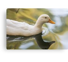 duck on lake Metal Print