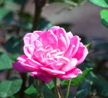 Longwood Gardens - Spring Series 178 Sticker