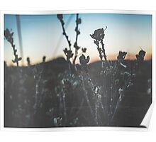 Desert Flowers Distressed Print Poster
