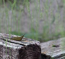 Slug on a Log by Tanner Shelton