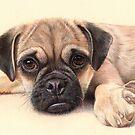 Puggle love  by Commission Kaz