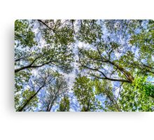 Trees in the sky Canvas Print