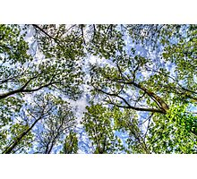 Trees in the sky Photographic Print