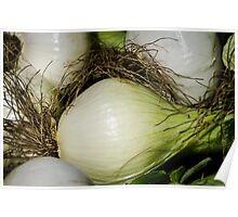 Onion Closeup Poster