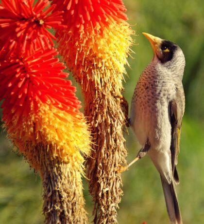 nectar  Sticker