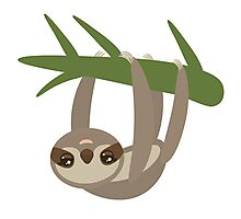 Cute sloth upside down Photographic Print