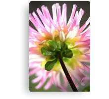Like A Candy Dahlia  Canvas Print
