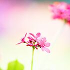 A single rose can be my garden... a single friend, my world. Leo Buscaglia ... by Kornrawiee