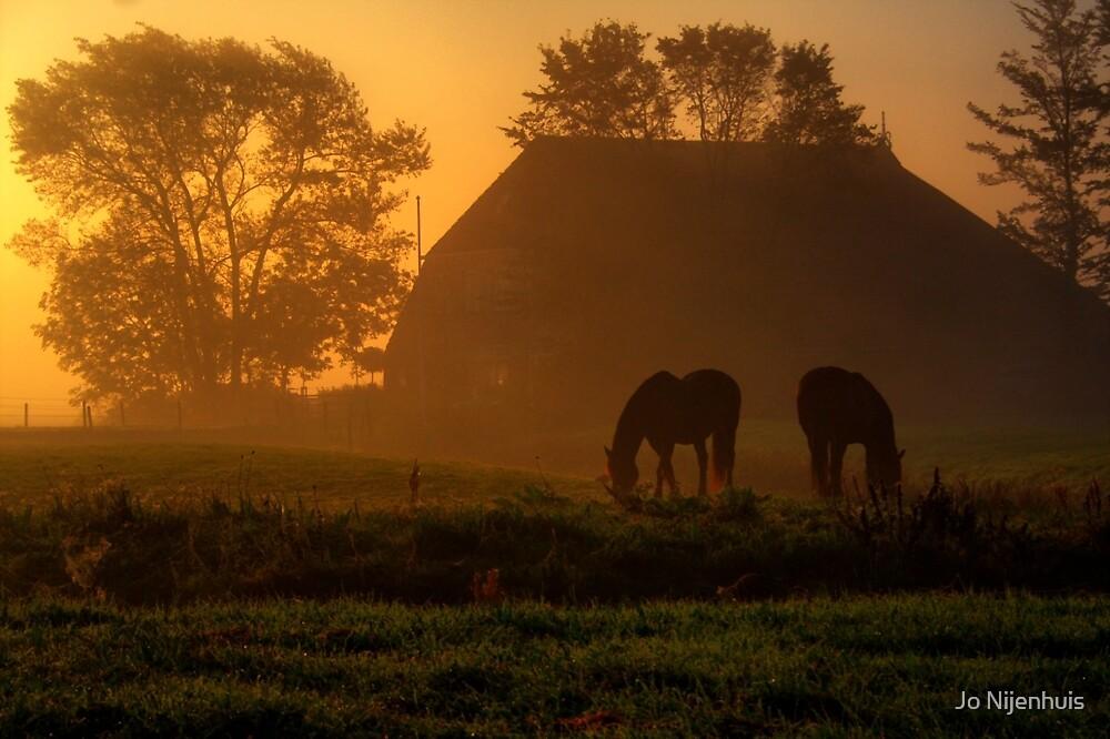 Horses in the Morning Light by Jo Nijenhuis