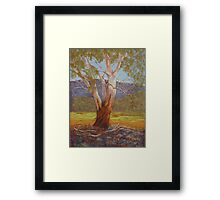 Megalong Majesty - Pastel Painting  Framed Print