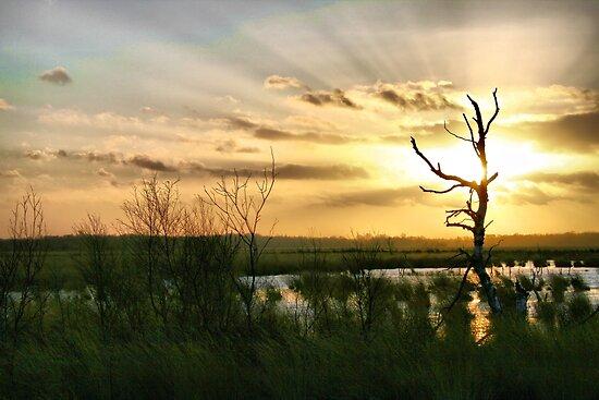 Glorious Heaven by Jo Nijenhuis