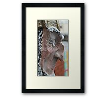evil beside Framed Print