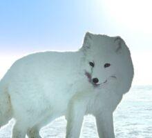 Arctic ox On The Ice Sticker