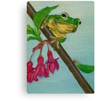 a peaceful frog Canvas Print