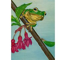 a peaceful frog Photographic Print