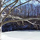 Winter at Lake Glacier by Monnie Ryan