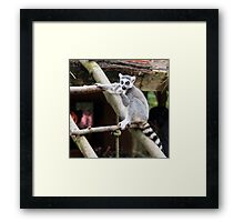Peaceful Lemur - Nature Photography Framed Print