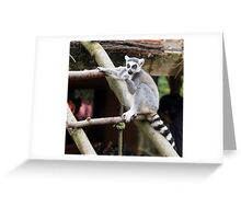 Peaceful Lemur - Nature Photography Greeting Card