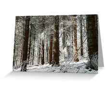 Beautiful icy forest lanscape view, winter time Greeting Card