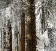 Beautiful icy forest lanscape view, winter time Sticker