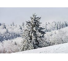 Beautiful snow-covered fir trees in winter forest, french mountains Photographic Print