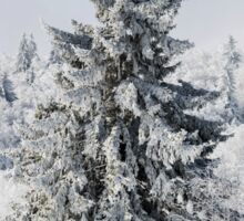 Beautiful snow-covered fir trees in winter forest, french mountains Sticker