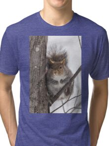 Large Grey Squirrel in a tree Tri-blend T-Shirt