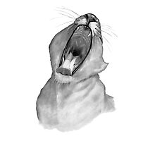 Lion Yawning: Big-Mouthed Lion: Pencil Drawing: Wildlife Photographic Print