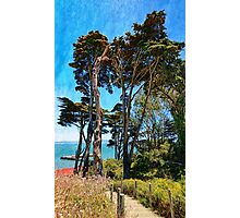 Golden Cypress Trees Photographic Print