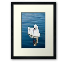 Reflections of a Swan Framed Print