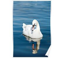 Reflections of a Swan Poster