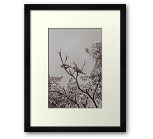 Couple of Parrots in the Top of a Tree Framed Print