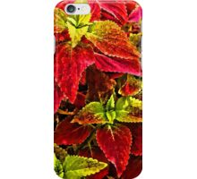 Colorful Coleus iPhone Case/Skin