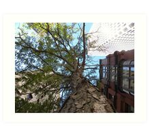 A Tree In the City by Leebabe (Providence, RI) Art Print