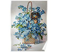 Dachshund and Forget-me-Nots Poster