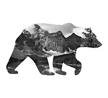 Grizzly Bear Silhouette  Photographic Print