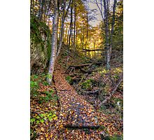 Walkway through the woods Photographic Print