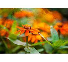 Flower Texture Photographic Print