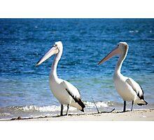 Pelican Pair Photographic Print