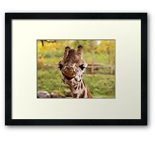 Hilarious Giraffe - Nature Photography Framed Print