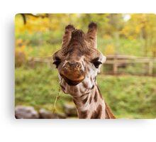 Hilarious Giraffe - Nature Photography Canvas Print