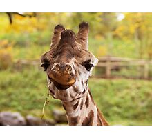 Hilarious Giraffe - Nature Photography Photographic Print
