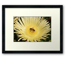 Summer Bee - Nature Photography Framed Print
