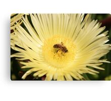 Summer Bee - Nature Photography Canvas Print