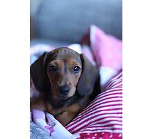 Little Sausage. Photographic Print