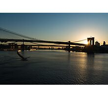 Soaring - Brooklyn Bridge Sunrise with a Seagull Photographic Print