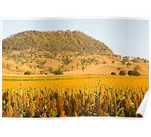 View of Mount Walker and Sorghum
