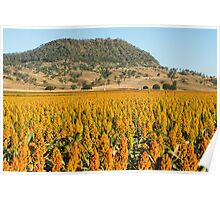 View of Mount Walker and Sorghum Poster