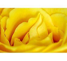 Rose macro Photographic Print