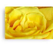 Yellow rose macro Canvas Print